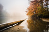 Fall Colors, Fallen Logs on the Snoqualmie River (Brian Xavier) Tags: copyright2017brianxavier brianxavier brianxavierphotography bxavier bxfoto bxfotocom densefog densemist fall fallcolors fallseason flickr fog fogblanket foggymorning logs mist misty mistymorning mistyriver outdooractivity outdoors reflections river rivershore rivers sandbank sandbar snoqualmieriver water