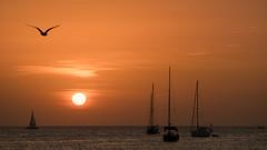 Three Boats (Bastian.K) Tags: ibiza v180mm40apo voigtlander sunset sunrise boat ship boats ships coast bay palma gull möwe sea seagull seemöwe sun beach segel segeln segelschiff