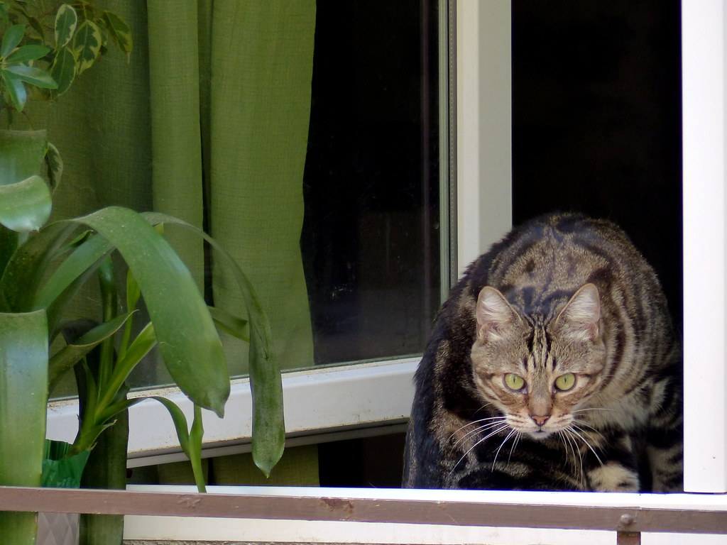The world 39 s best photos of rideau flickr hive mind for Cat window chaise