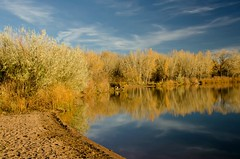 Reflections of Colorado (catmccray) Tags: chatfieldstatepark fall autumn cottonwoodtrees