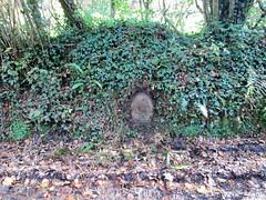Denhambridge North C stone in bank SX 47719 67961 (Bridgemarker Tim) Tags: denhambridge westdevon bucklandmonachorum berealston tavyriver oldbridges devonbridges bridgemarkers