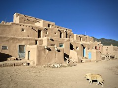 Going home (kimbar/Thanks for 3.5 million views!) Tags: taospueblo taos pueblo dog newmexico