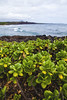 (Melissa Emmons Photography) Tags: kauai hawaii luckywelivehawaii hilife 808 808state island paradise home coastal nature honu turtle seal monkseal canon landscape canon5d getoutside neverstopexploring trees explore coastline