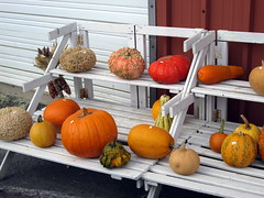 Gourd And Pumpkin Display. (dccradio) Tags: smithsburg md maryland ivyhillfarm farmstore orchardstore ag agricultural agriculture produce harvest autumn fall gourds gourd pumpkins pumpkin corn indiancorn canon powershot a3400is