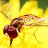 Tão bonitinha 😊 (Paulo Mattes) Tags: fly flowers flower flor flickr flores natgeo naturelovers natureza nature brazil brasil br mosca mosquito canont5i canonbrasil canon