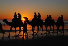 DSC_0788g (Tartarin2009 (travelling)) Tags: sunset australia broome cablebeach travel nikon d80 silhouettes beach sea seascape sand telegraph camel dromadaire ride