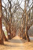 IMG_0074 (Couchabenteurer) Tags: simbabwe jacarandatree harare street