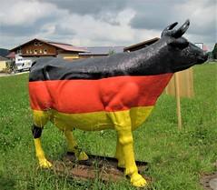 A German Cow, Explored on October 15th2017 (Hannelore_B) Tags: kuh cow unterammergau bayern bavaria deutschland germany smileonsaturdaylinesandstripes smileonsaturday linesandstripes