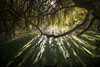fight for light (Rafael Zenon Wagner) Tags: sunstar blendenstern sony a7r2 light licht schatten shadow kontrast contrast gegenlicht contralight teich pond afternoon nachmittag sun sonne green grün baum tree natur nature 18mm