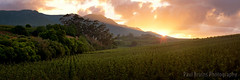 Grabouw Mountain Sunrise (Panorama Paul) Tags: paulbruinsphotography wwwpaulbruinscoza southafrica westerncape grabouw elginvalley mountains appleorchard fruit clouds sunrise nikond800 nikkorlenses nikfilters panorama