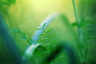 Lilliputian jungle - Jungles lilliputiennes