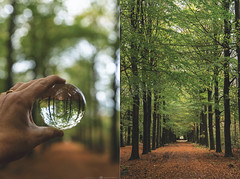 (CarolienCadoni..) Tags: sony sonyilcaa99m2 sal2470z bokeh dof forest gasselte crystalball creative hand leaves fall autumn october light reflection diptych wood tree