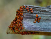 trying to find one's own space in life (fromkmr) Tags: sonya99ii redwoodregionalpark oaklandca ebparksok hiking minoltavintage minolta70210 autumn ladybugs crowded