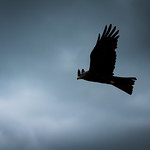 Flying through the dark sky thumbnail