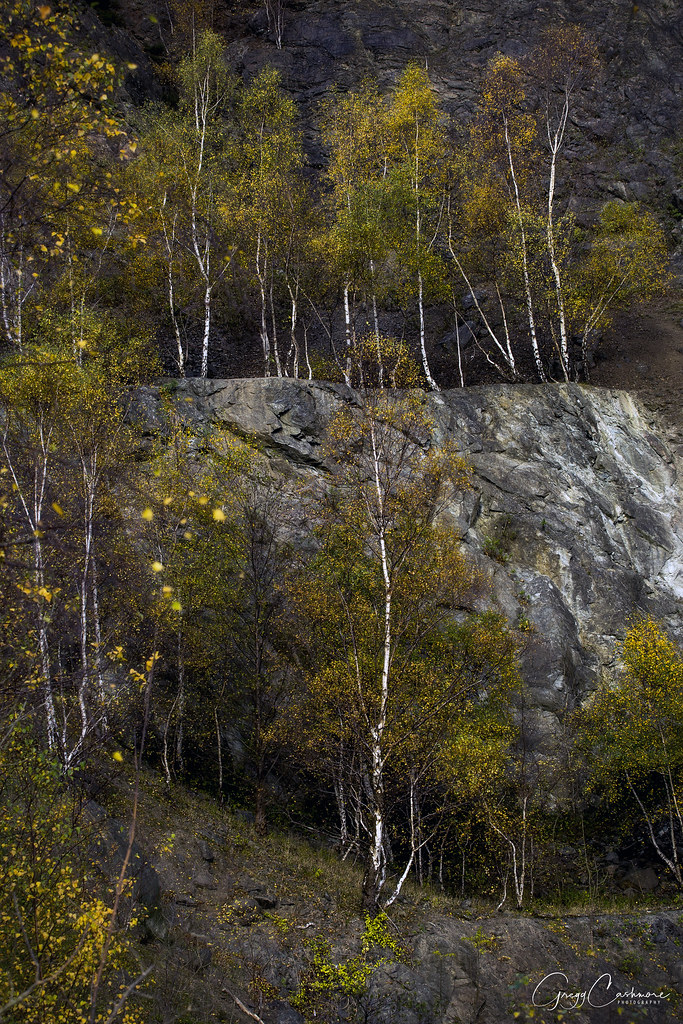 gullet quarry- igneous investigation essay Britain's oldest agnathans recovered in this investigation are from two localities in shropshire bioclastic linrestone bands in gullet quarry (5(.