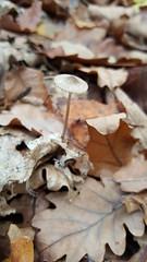 Mushrooms and fungus (will668) Tags: mushrooms fungus fungi blean kent toadstools undergrowth intheundergrowth nature spores shrooms bleannaturereserve