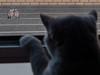 Love in danger (Alberto Pérez Puyal) Tags: alberto bird cat columbus danger funny kiss leg love paloma perez pet puyal spain window