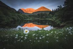 Glencoe Lochan Daisies (Bryan Harkin) Tags: scotland glencoe lochan loch daisies daisy flowers sunset mirror still life landscape scottish scenery