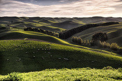 Home in the Springtime (Kevin_Jeffries) Tags: hills green southcanterbury newzealand nikon d800 nikkor kevinjeffries landscape rollinghills curves trees sheep nz spring springtime nature