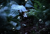 fishing (LeonArts.at) Tags: cat katze fisch fish fishing aquarium tank fishtank lauer spannung jagd lookout tension hunt chase jagen hunting jäger hunter