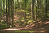 abetone bosco (giordano torretta alias giokappadue) Tags: abetone bosco testndfilter vento ventonelbosco