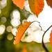 171005-leaf-leaves-autumn-fall.jpg