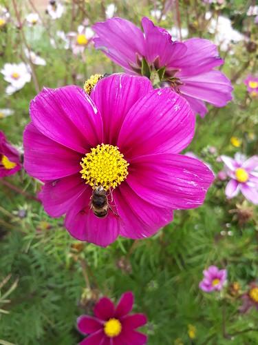 Flowers at Crathes Castle