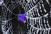Low key (Meastrology) Tags: lowkey low key spring spider spiderwebs spinne spinnen spinnenweben spiders spiderweb sp dew traum traumhaft tropfen tau dream dreamy drop drops droplet droplets drausen dreaming divine divinity dreams canon color colors colours colour conceptual concept bokeh beauty beautifull blume blossom blüte blossoms blumen blüten belichtung sun schön sonne sunlight sunshine studio studiophotography photo plant picture pflanze photography magic magical magisch macro makro morning morgen nature natur night nacht nebel