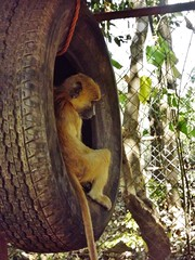 "Yellow Baboon • <a style=""font-size:0.8em;"" href=""http://www.flickr.com/photos/152934089@N02/36944493483/"" target=""_blank"">View on Flickr</a>"