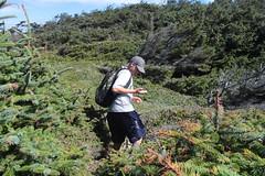 Ow, that plant bit me! (rozoneill) Tags: blacklock point floras lake cape blanco sixes river langlois bandon state park oregon coast trail hiking