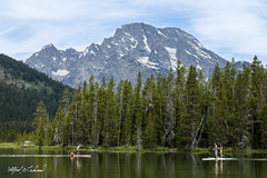 Playing Chicken_27A0193 (Alfred J. Lockwood Photography) Tags: alfredjlockwood nature landscape humor playingchicken paddleboarding forest mountmoran spruce summer pinetree rockymountains clouds stringlake water reflection morning wyoming grandtetonnationalpark