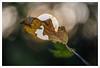 Fragile barriera (Outlaw Pete 65) Tags: macro closeup foglia leaf ramo branch sole sun luce light natura nature colori colours nikond600 sigma105mm collebeato lombardia italia