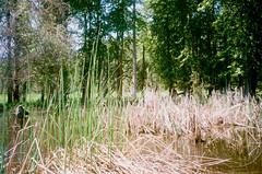 5.2017 LLWM W Branch Little Spokane Wildife Area  N. C41 CPS0019 (Jcicely) Tags: 2017 easternwashington kayaking loonlake loonlakewithmarvin may reeds water