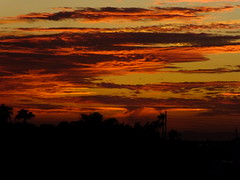 Burning Sky (Scott Douglas Worldwide) Tags: g golden godlike glorious gold god great glow sky s sunrays smiling sun sunset sexy sunrise colour closeup c clouds cute classic custom camera calming cool mystical m misty magic perfect peaceful paradise p palmtree palm palms palmtress pretty pink pp freedom f flickrunitedaward firesky fire az arizona awesome america american amature atlasta awsome beautiful badass b bright bronze