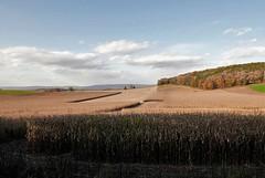PLAYED OUT CORN FIELD (Rob Patzke) Tags: cornfield farm autumn trees corn landscape lumix lx100 texture shadow nature color