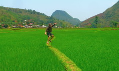 Jumping up the Country (Eye of Brice Retailleau) Tags: chemin colourful colours countryside fields green hills landscape outdoor path paysage rice scenery scenic summer sunny trail travel vert view vista extérieur prairie colline champ camino panorama asia asie vietnam maichau