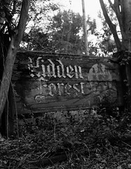Hidden Forest (Jacob Gralton) Tags: black white film ilford hp5 4 by 5 4x5 large format photography street darkroom bw monochrome