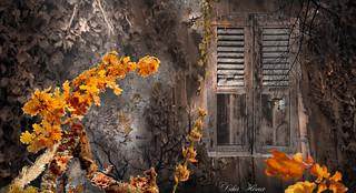 Le vieux chalet abandonné