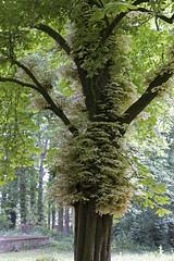 Tree beauty (Photography by Martijn Aalbers) Tags: tree boom green groen nature natuur seldensate leaves bladeren spring lente brabant dutch nederlands thenetherlands nederland canoneos550d ef35mmf2isusm wwwgevoeligeplatennl