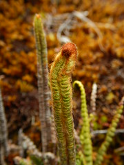 Unknown fern (Christophe Maerten) Tags: colombia colombie jungle cauca huila ​ purace paramo tierra indiguena native people parque natural parc volcan volcano vulkaan