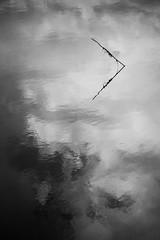 Près salés, Arès, France (pas le matin) Tags: water plant reflection sky clouds eau plante reflet ciel nuages travel voyage arès préssalés aquitaine france europe europa bw nb noiretblanc blackandwhite canon 7d canon7d canoneos7d eos7d