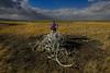 361A2111 (Rotifer) Tags: yellowstone yellowstonepark yellowstonenationalpark specimenridge specimenridgetrail specimenridgeyellowstonenationalpark