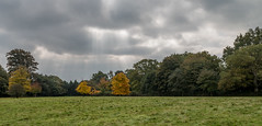 20171015-IMGP0785 (rob mulf) Tags: nymans landscapes pentax westsussex greatbritian england outdoors nature