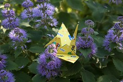 Paper Crane and Caryopteris incana (Ichigo Miyama) Tags: origami papercrane flower caryopterisincana 花 ダンギク ツル 折り紙 おりがみ おりがみ写真 origamiphotoツルとダンギク 折り鶴 paper origamiphoto