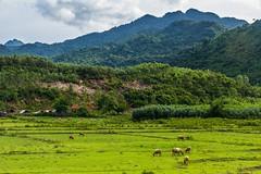 Krajina v parku Phong Nha - Ke Bang (zcesty) Tags: zvířata vietnam14 krajina hory buvol vietnam phongnha dosvěta quảngbình vn