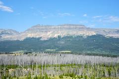 Looking west near St. Mary (wplynn) Tags: stmary montana blackfeetindianreservation landscape scenery glaciernationalpark glacierpark nationalpark forestfire burn deadtrees