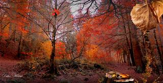 Promenons-nous dans les bois, tant que ... etc ...