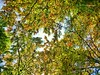 colorful leaves  ( i ♥ autmn ) (Veitinger) Tags: veitinger sony natur nature deutschland germany badenwürttemberg schwarzwald blackforest wald wood forest herbst autumn bunt colorful baum bäume tree trees blätter leaves laubbaum laubbäume deciduous
