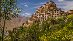 Key Monastery (sakthi vinodhini) Tags: spiti monastery buddha buddhism travel trek backpack himachal pradesh india incredible flowers blooming summer mountains himalayas serene learning arts study lamas