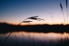 Edit -1-7 (Dane Van) Tags: canadacreekranch ccr atlantamichigan puremichigan sunset canon5d 5dclassic 35mm 35f2is lakegeneva